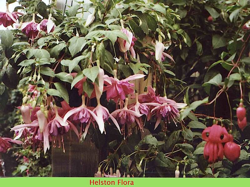 helston-flora-463