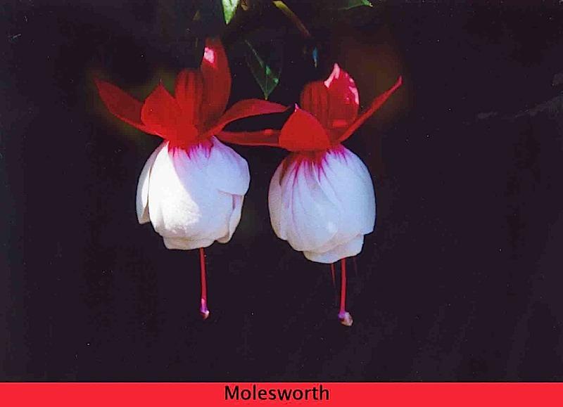 molesworth-474