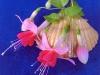 seashells-rundle-483