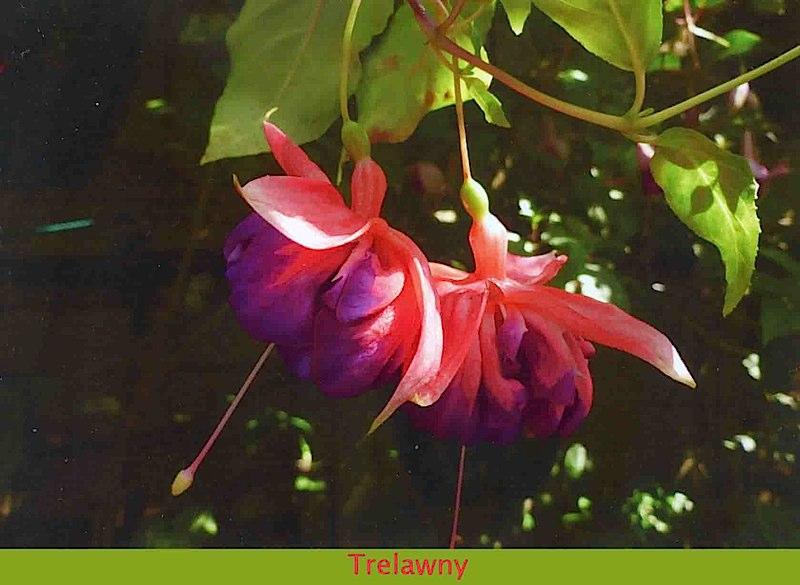 trelawny-468