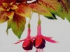Autumnale 555